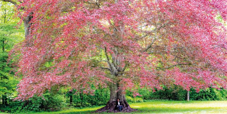 himmeblau-Blog-Elisabeth-Carr-Kulturgestalterin-Baum
